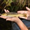 Herzlich willkommen beim Angler- Verein Hofgeismar